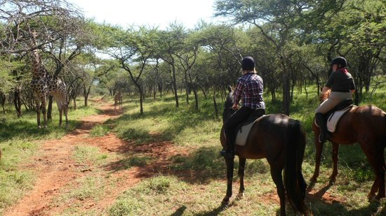 Pongola, Afrika Selatan: Horses Wildlife and Scenery