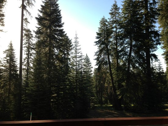 Montecito Sequoia Lodge: View from balcony