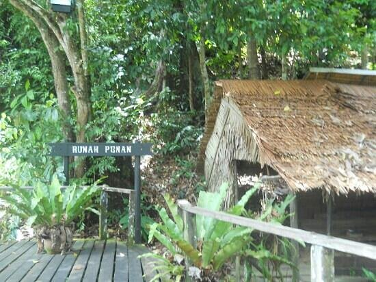 the penan culture He wanted no association with the culture of commerce, to avoid money, and to make everything himself he flew to thailand, spent six months wandering through southeast asia, then surreptitiously joined a british caving expedition in the mulu caves in sarawak from there, he set out into the wilderness looking for the penan.