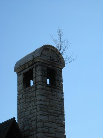 Mohonk Mountain House: a tree growing in the sky