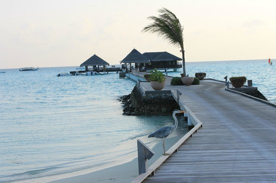 Taj Exotica Resort &amp; Spa: The dock and scuba center