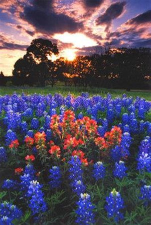 BEST WESTERN PLUS Inn of Brenham: Wildflowers