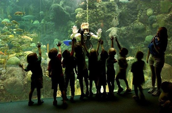 Hilton Tampa Airport Westshore: The Florida Aquarium