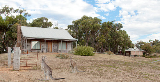 Grampians Pioneer Cottages: Local Kangaroos