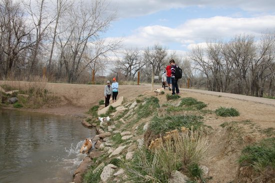 Dog park fun picture of chatfield state park littleton for Chatfield fishing report