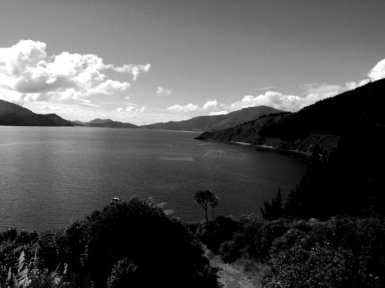Marlborough Region, New Zealand: B&W view