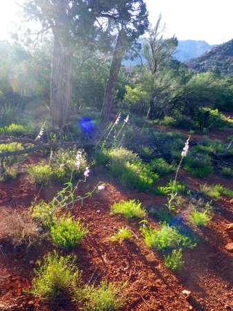 BEST WESTERN PLUS Inn of Sedona : Pathway near hotel