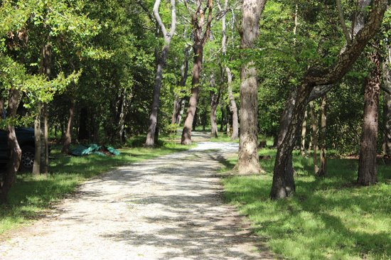 The Baywood Bed and Breakfast: driveway