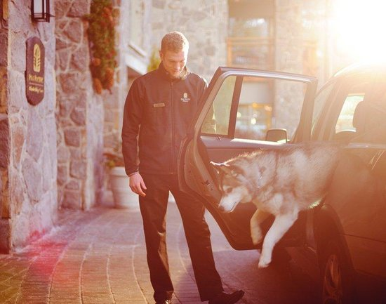 Pan Pacific Whistler Village Centre: Pet Friendly Accommodation