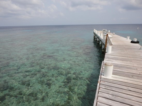 Utopia Dive Village: Utopia dock and pristine house reef.