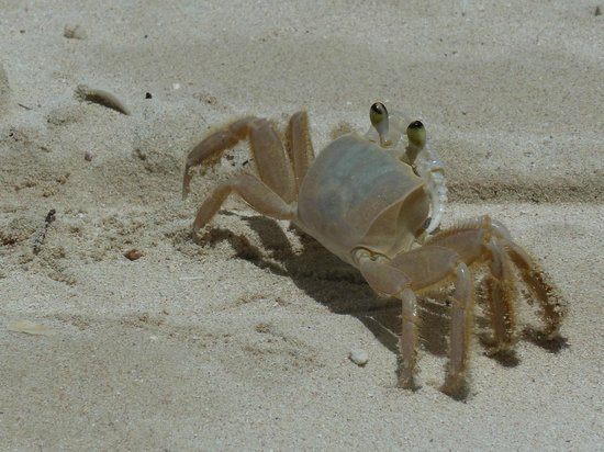 Coyaba Beach Resort: Small crabs