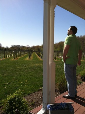 Cutchogue, NY: The vineyard