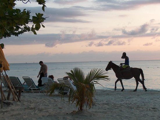 Country Country Beach Cottages: Horses walk by every evening...