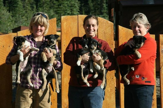 ‪‪Cantwell‬, ‪Alaska‬: Meet the puppies at DogGoneit Tours‬