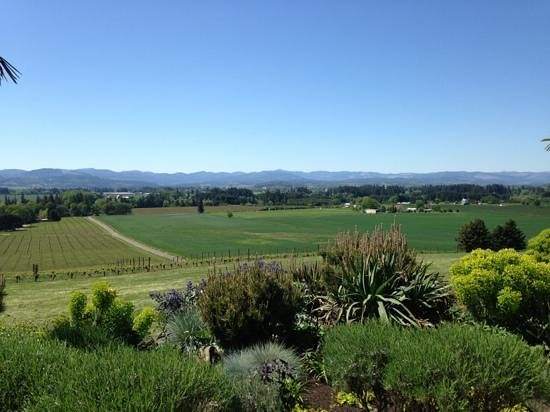 Carlton, Oregn: amazing view from the vineyard