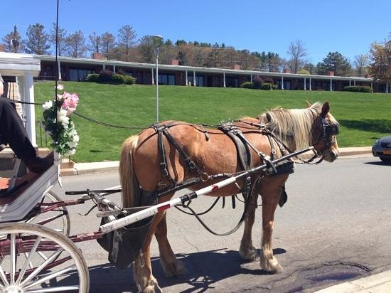 Cove Haven Resort: our horse and carriage ride on the resort so romantic