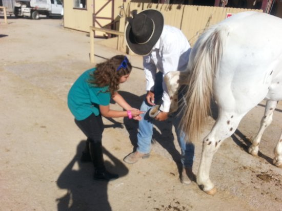 the importance of a clean horse All around trail horses, vail picture: learning how to clean horse's hooves, and the importance , i as well learned a lot it was awesom - check out tripadvisor members' 422 candid photos and videos of all around trail horses.