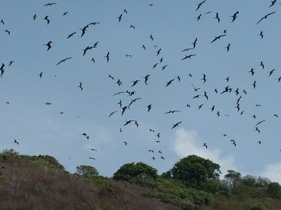 Speyside, Tobago: St. Giles Frigate Bird Colony