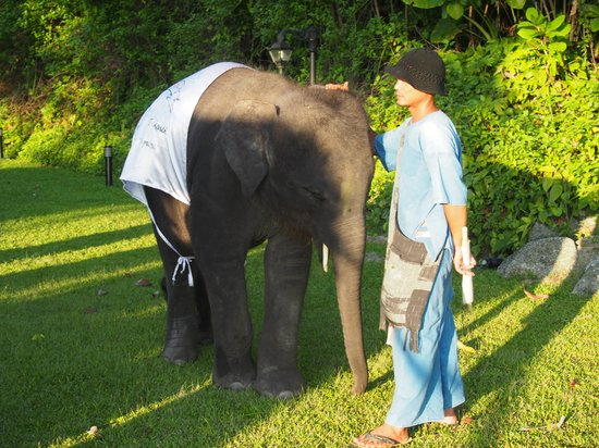 Le Meridien Phuket Beach Resort : baby elephant 
