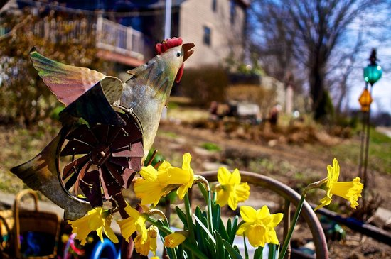 Roseledge Country Inn and Farm Shoppe: Spring country hen.