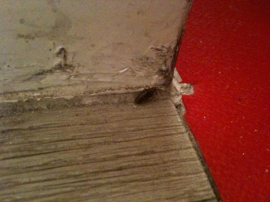 My Hotel In France Opera Saint Georges: Cockroach on the floor