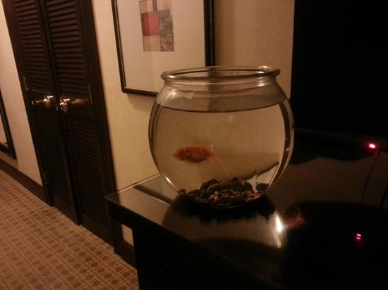 Hotel Burnham - a Kimpton Hotel: Goldfish available to keep you company in your room.