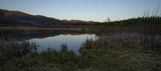 Historic Tamarack Lodge: Beaver Pond