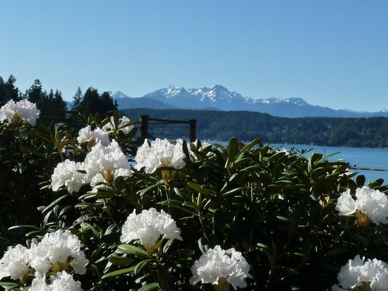 Alderbrook Resort & Spa : Rhododendrons in bloom in May at Alderbrook. Olympic Mtns beyond