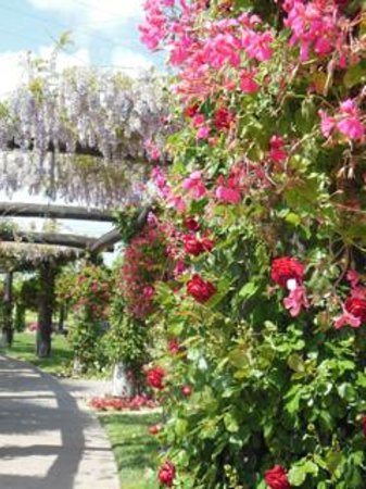 South Coast Winery Resort & Spa: The wisteria arbor at South Coast