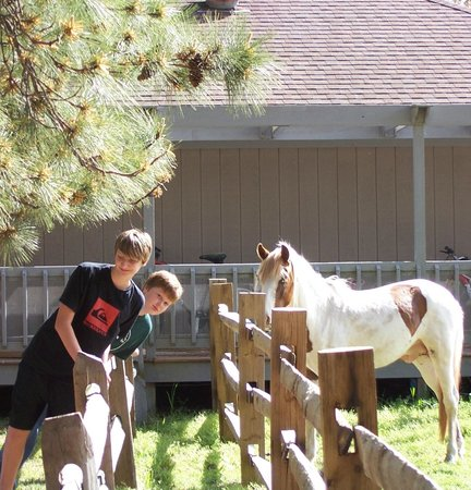 Refuge Inn: The pony pen
