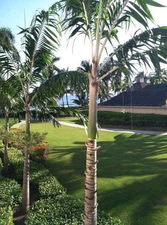 The Ritz-Carlton Golf & Spa Resort: View from our room