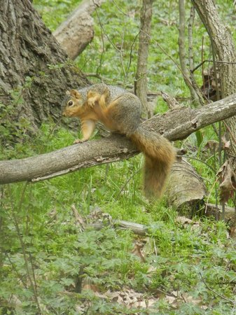 Huron, OH: The squirrels are VERY friendly