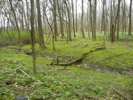 Huron, OH: The woodland walk