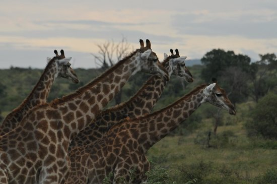 Marloth Park, South Africa: Safari