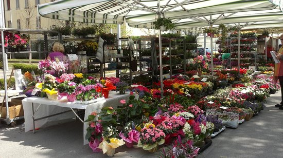 Holiday Inn Venice Mestre Marghera : one of the flower stalls at the exceptionally big market just a few mins from hotel