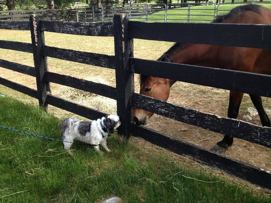 Pheasant Field Bed & Breakfast: Patches and his new friend