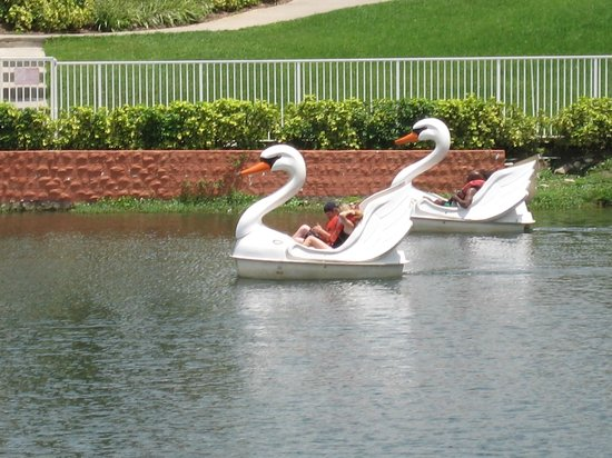 Westgate Vacation Villas: Swan boats