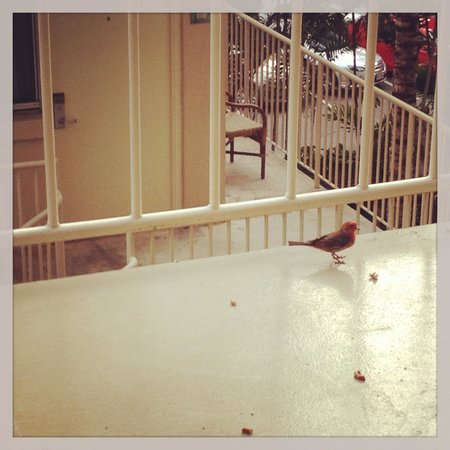 Courtyard by Marriott Waikiki Beach: Local Avian Balcony Buddies