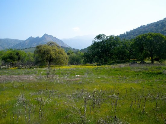 Three Rivers, CA: Meadow with trails and wildflowers