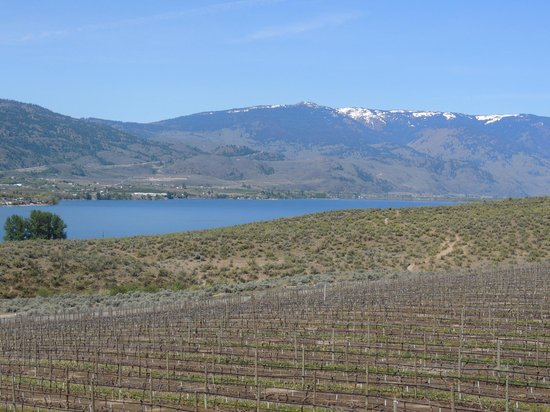 Spirit Ridge Vineyard Resort & Spa: Vineyards and lake , view from the resort
