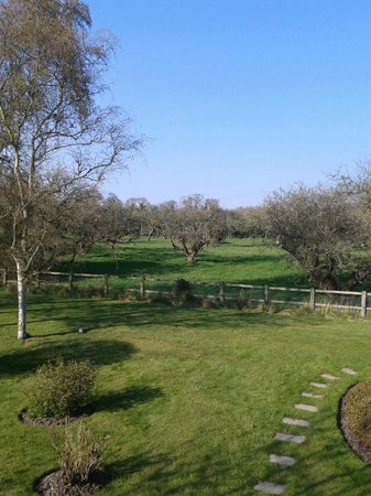 Halesworth, UK: View across the orchard - spend time on a blanket in the sun here!