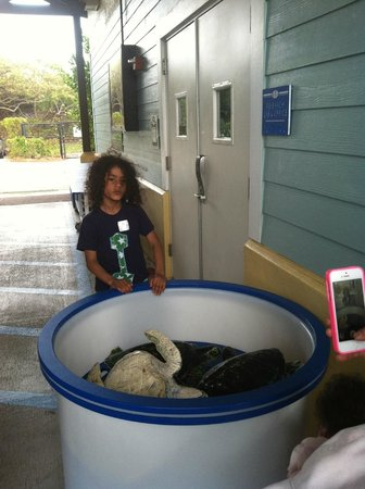 Juno Beach, FL: My Grandson at the Loggerhead Marinelife Center