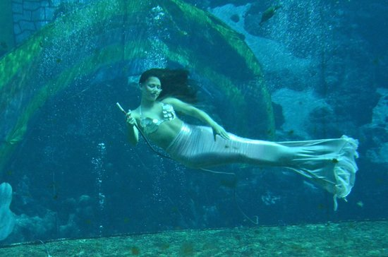 Mermaids in Florida Weeki Wachee Weeki Wachee Springs Mermaid