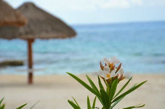 Presidente Inter-Continental Cozumel Resort & Spa: quiet relaxing beach