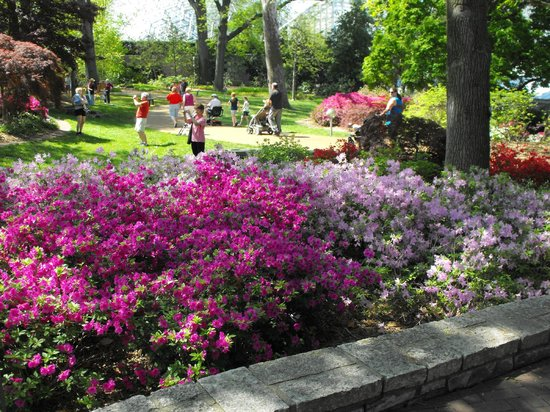 Azaleas In Bloom Picture Of Missouri Botanical Garden Saint Louis Tripadvisor