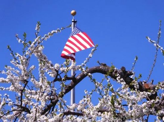 Walpole, NH: Flag with a blossoming tree