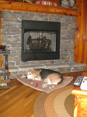 Barkwells, The Dog Lovers' Vacation Retreat : Eldon in Bo's Hideaway in the Fall