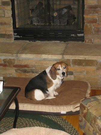 Mills River, NC: Jellybean Enjoying the Fireplace at Peppermint Patty's