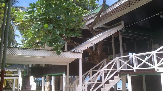 Speyside, Tobago: stairs up to treehouse