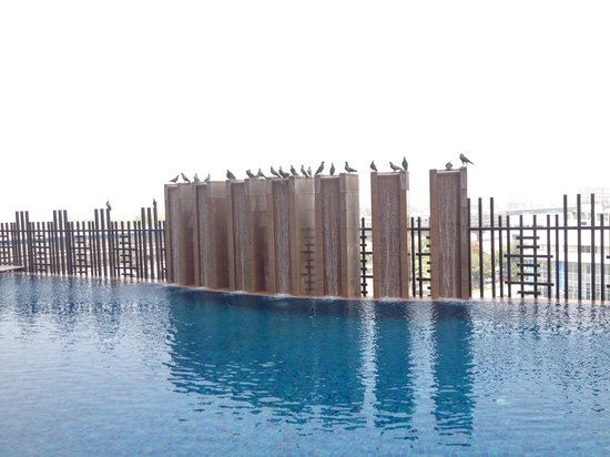 DoubleTree By Hilton New Delhi-Noida-Mayur Vihar: Pigeons enjoy the bath at Swimming Pool of the hotel